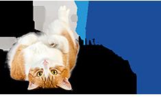 Axels Katzen Guide